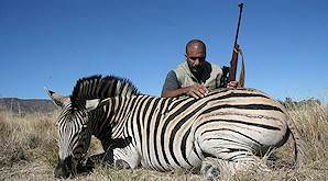 A hunter with his Burchell's zebra trophy.