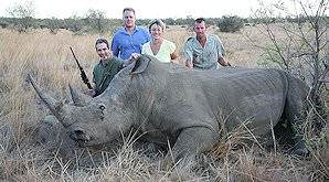 White rhino are hunted following strict permit issuing procedures.